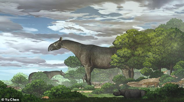 A giant ancestor to the modern-day rhinoceros roamed China 26.5 million years ago and was taller than a giraffe, according to the team that found its remains