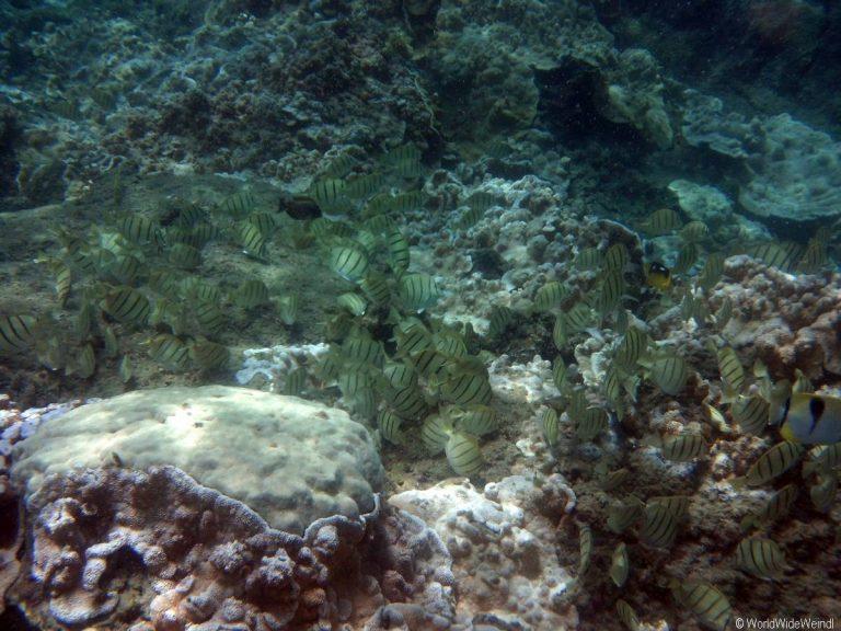 Big Island 221- Kapoho Tide Pools