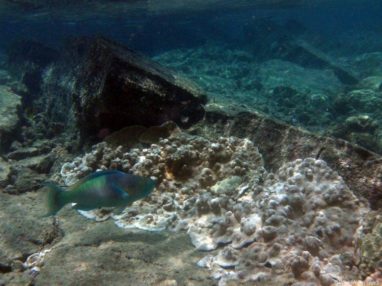 Big Island 222- Kapoho Tide Pools
