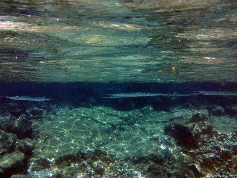 Big Island 223- Kapoho Tide Pools