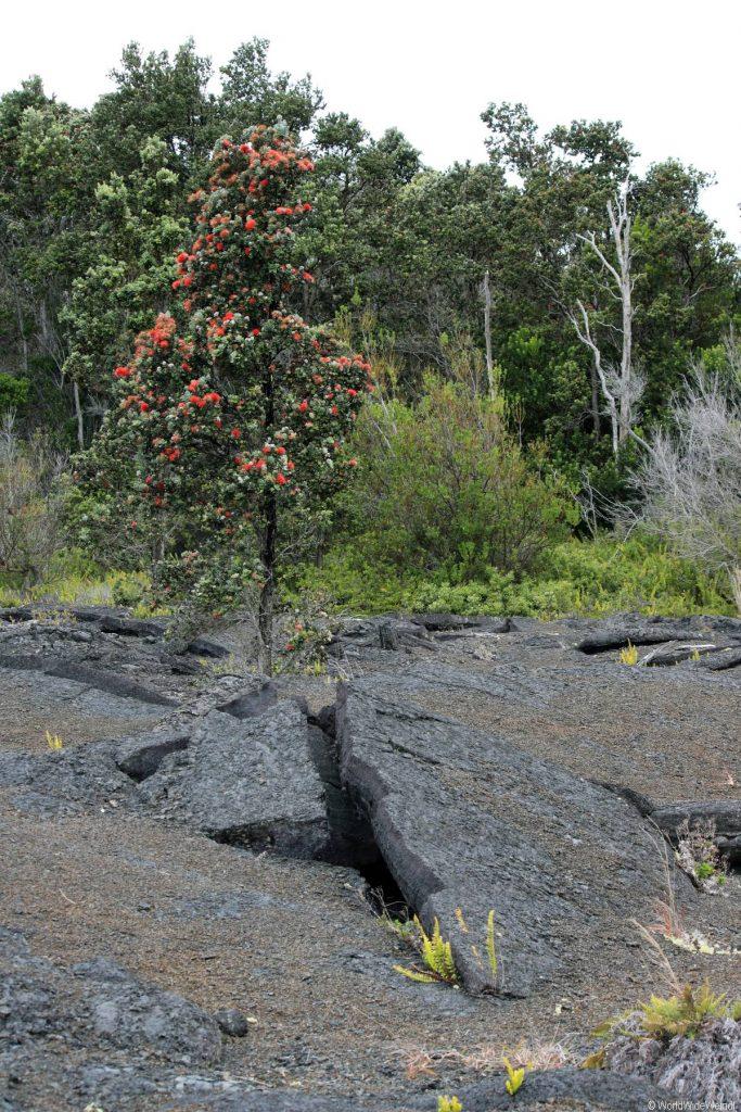 Big Island 270- Volcanos Nationalpark