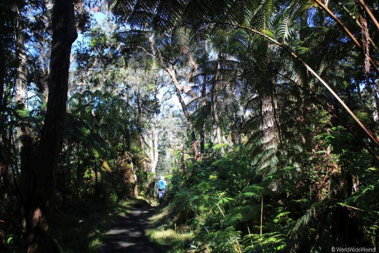 Big Island 485- Kilauea Iki Trail