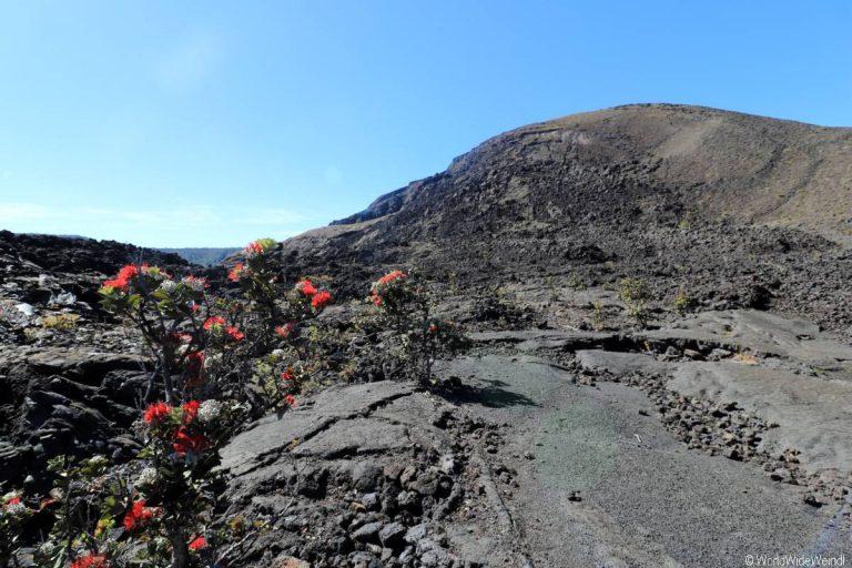 Big Island 495- Kilauea Iki Trail