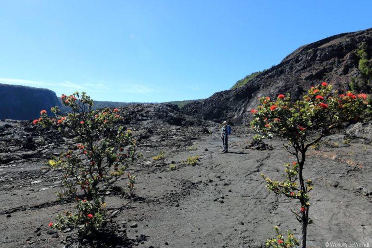 Big Island 510- Kilauea Iki Trail