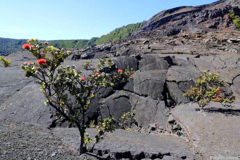 Big Island 515- Kilauea Iki Trail