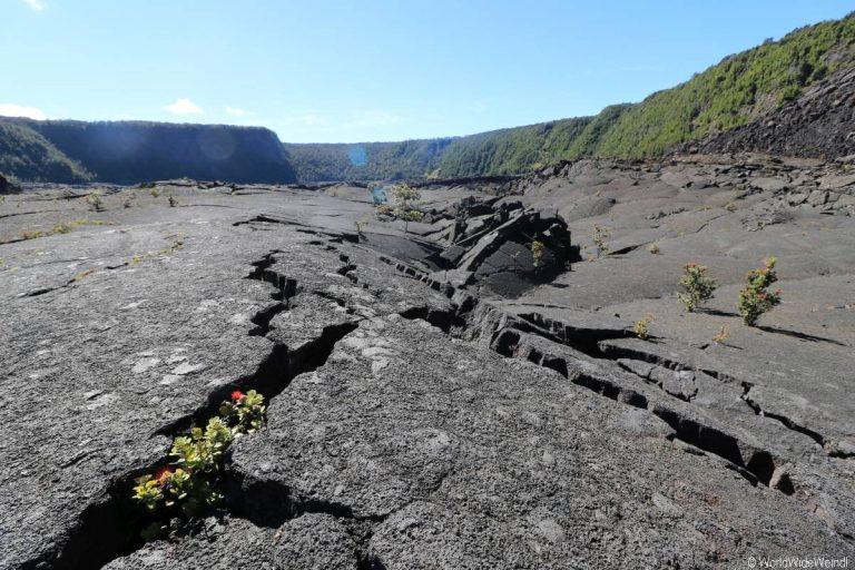 Big Island 520- Kilauea Iki Trail