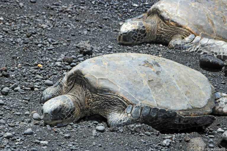 Big Island 575-Punalu'U Black Sand Beach