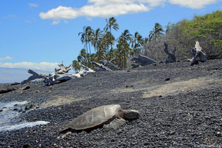Big Island 590a- Kiholo Bay