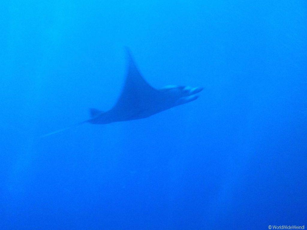Big Island 617- Kona Manta Night dive