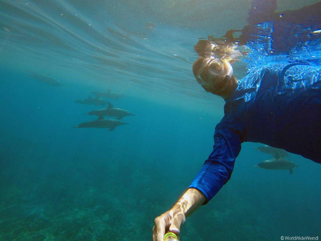Delfin selfie