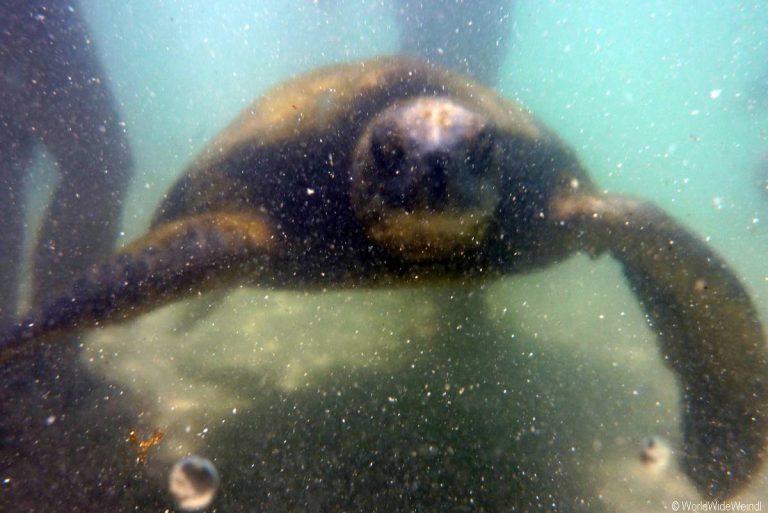 Big Island 87- Carlsmith Beach Schildkröte