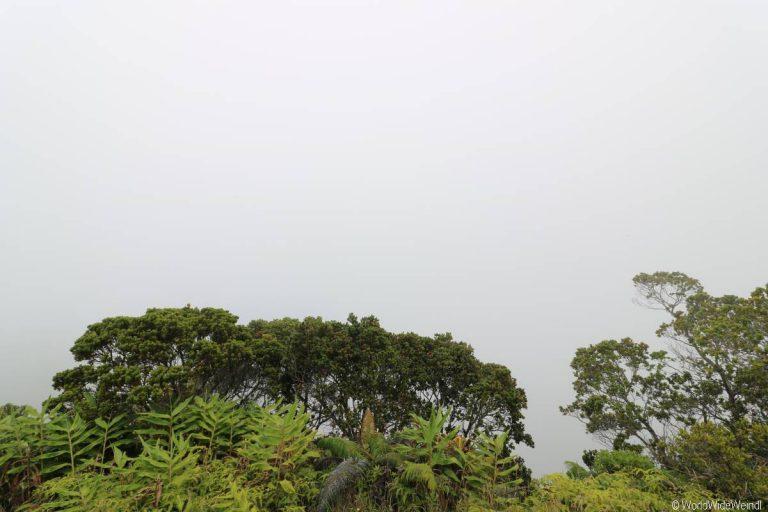 Kauai 1855- Koke'e State Park, Kalalau Lookout