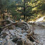 Kreta_Crete_247_Sfakia, Imbros Schlucht