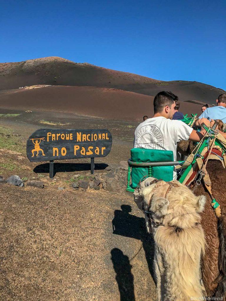 Lanzarote 413, Nationalpark Timanfaya, Dromedarstation