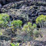 Lanzarote 478, Nationalpark Timanfaya, Wanderung zur Caldera Temensana