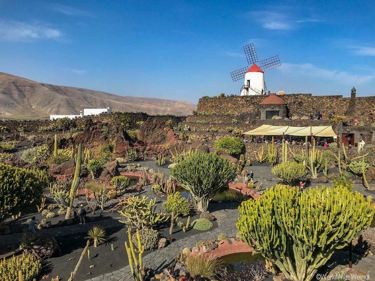 Lanzarote 970, Jardin de Cactus