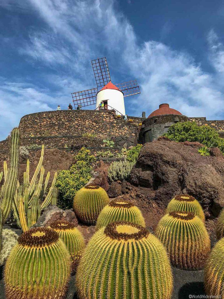 Lanzarote 982, Jardin de Cactus