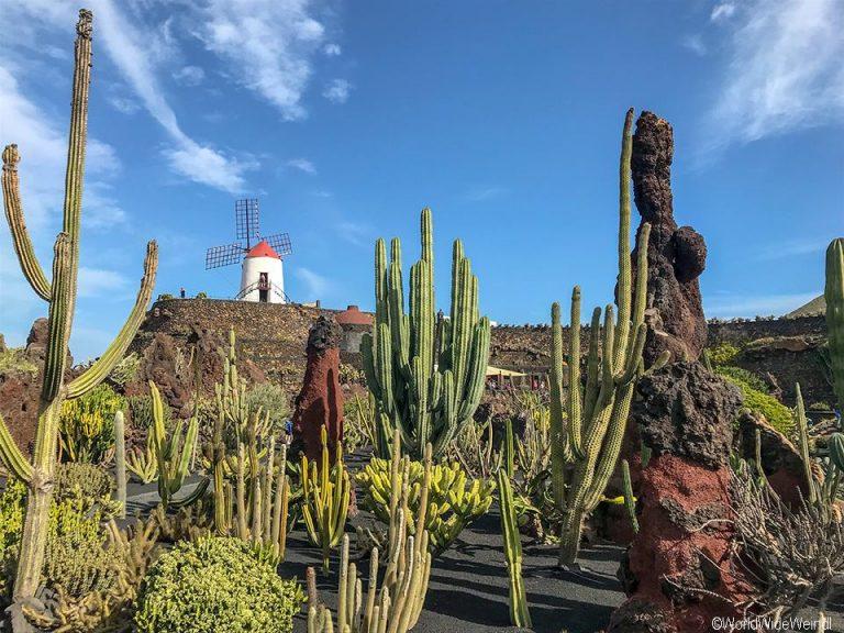 Lanzarote 984, Jardin de Cactus