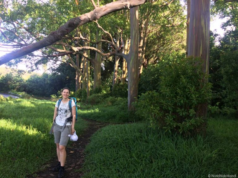 Maui 225- Road To Hana, Regenbogen Eucalyptus 6