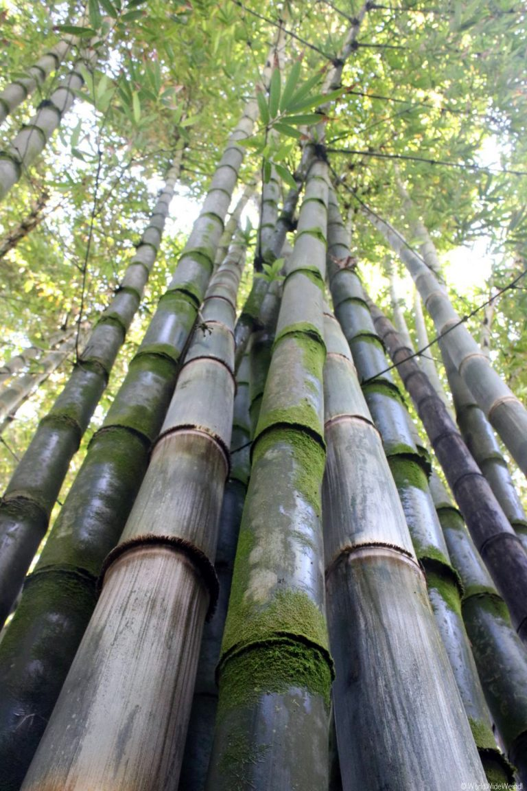 Maui 285- Road To Hana- Garden Of Eden Arboretum 1