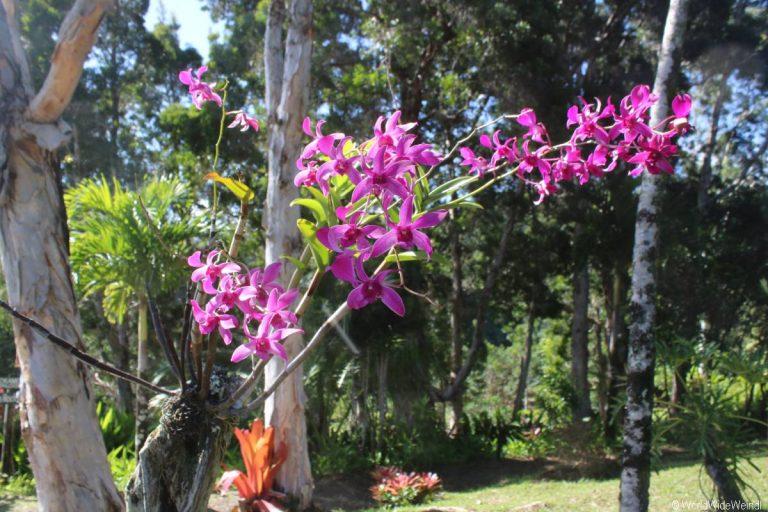 Maui 305- Road To Hana- Garden Of Eden Arboretum 5