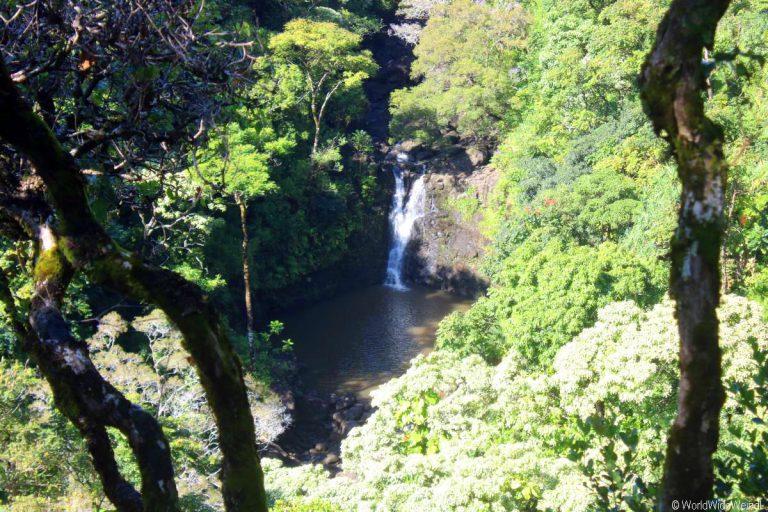 Maui 320- Road To Hana- Garden Of Eden Arboretum 8