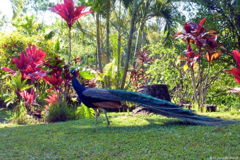 Maui 325- Road To Hana- Garden Of Eden Arboretum 9