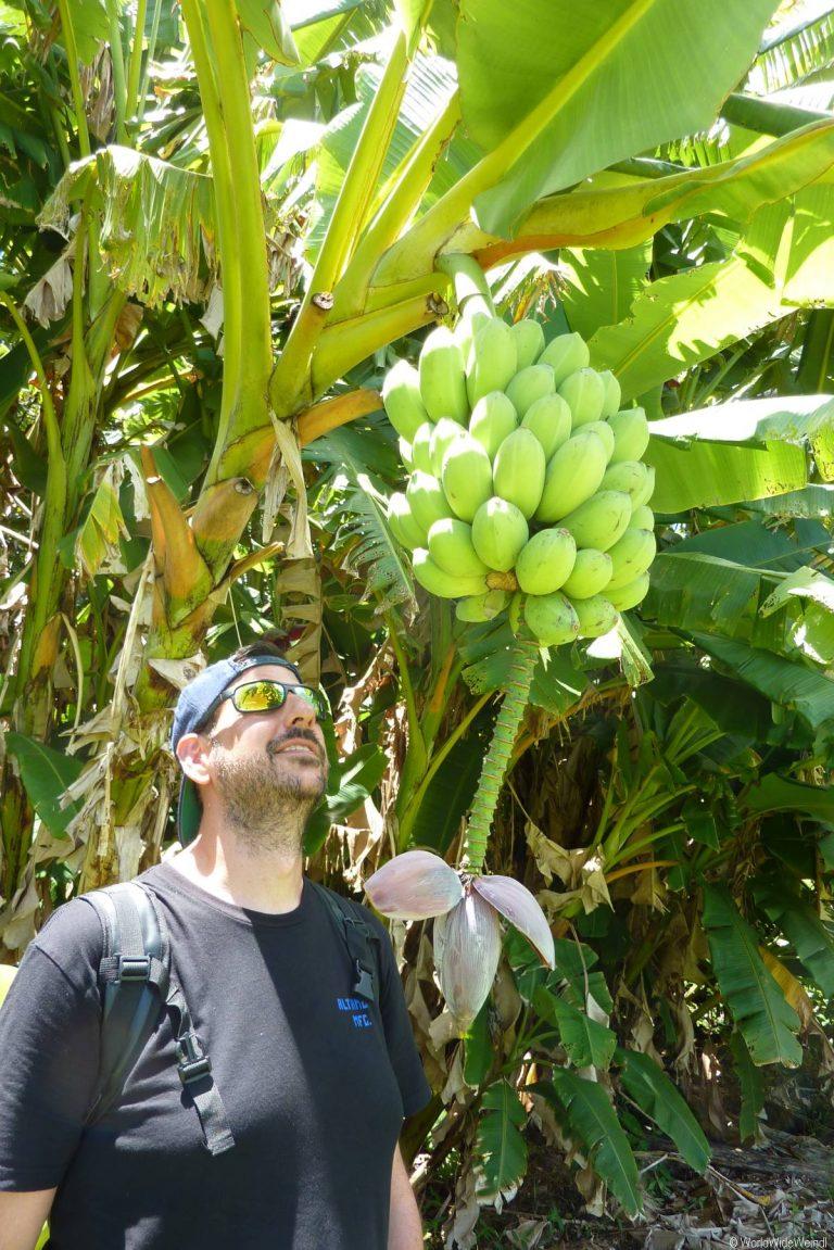 Maui 365, Road To Hana, Kahanu Garden