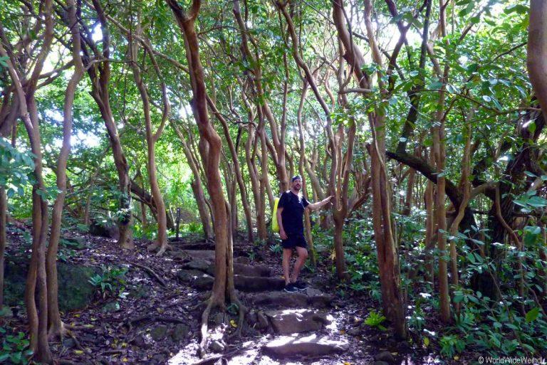 Maui 480, Road To Hana, Kipahulu, Haleakala National Park
