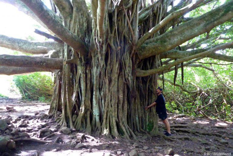 Maui 485, Road To Hana, Kipahulu, Haleakala National Park