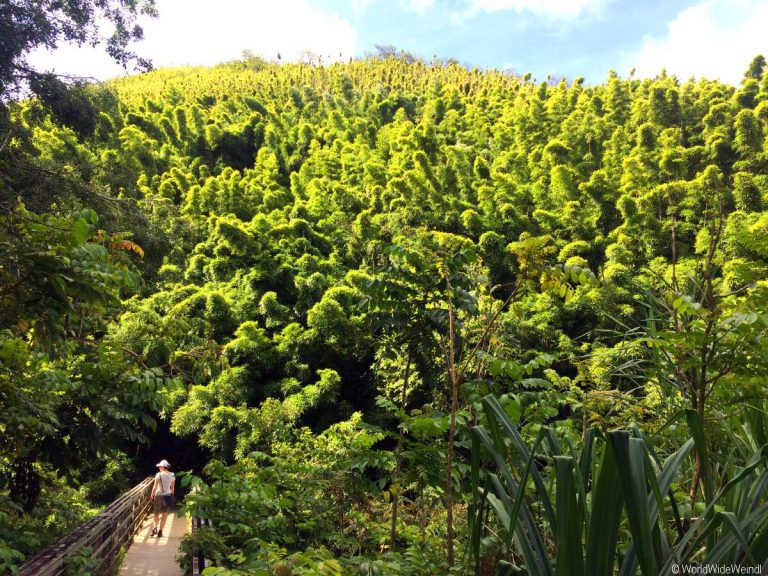 Maui 495, Road To Hana, Kipahulu, Haleakala National Park