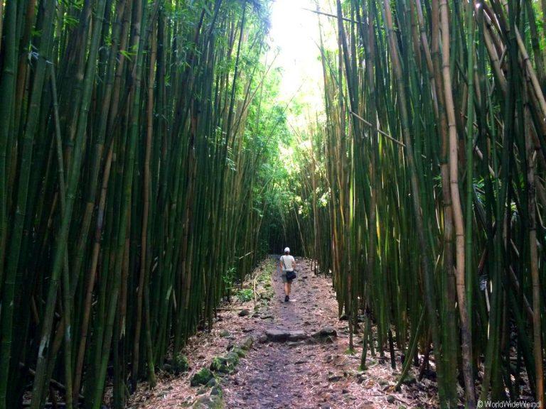 Maui 510, Road To Hana, Kipahulu, Haleakala National Park