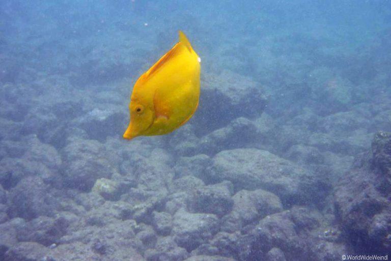 Maui 584- ahihi-kian'u reserve