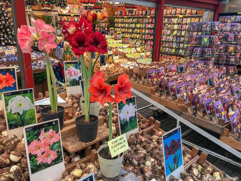 Niederlande, Amsterdam 172, Bloemenmarkt