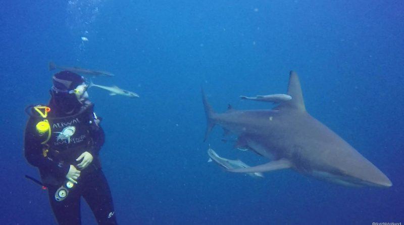 Südafrika 1206a- Aliwal Shark Dive- Sandra