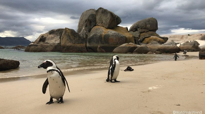 Südafrika 214- Boulders Beach