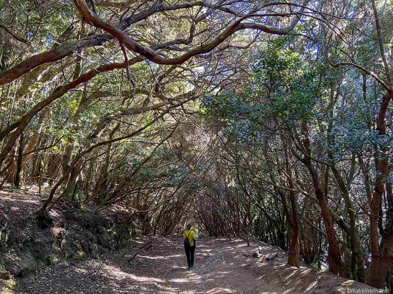 Teneriffa: Mirador Cruz del Carmen- Wanderung
