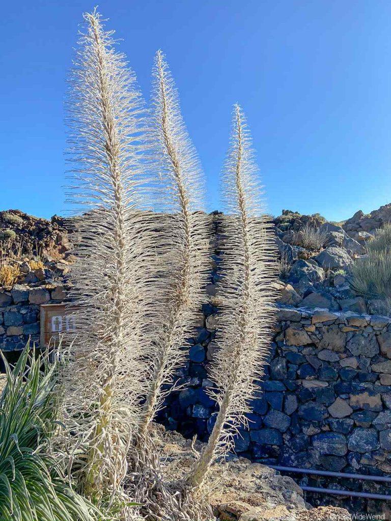 Spanien, Teneriffa_211_Nationalpark Pico del Teide- Besucherstation