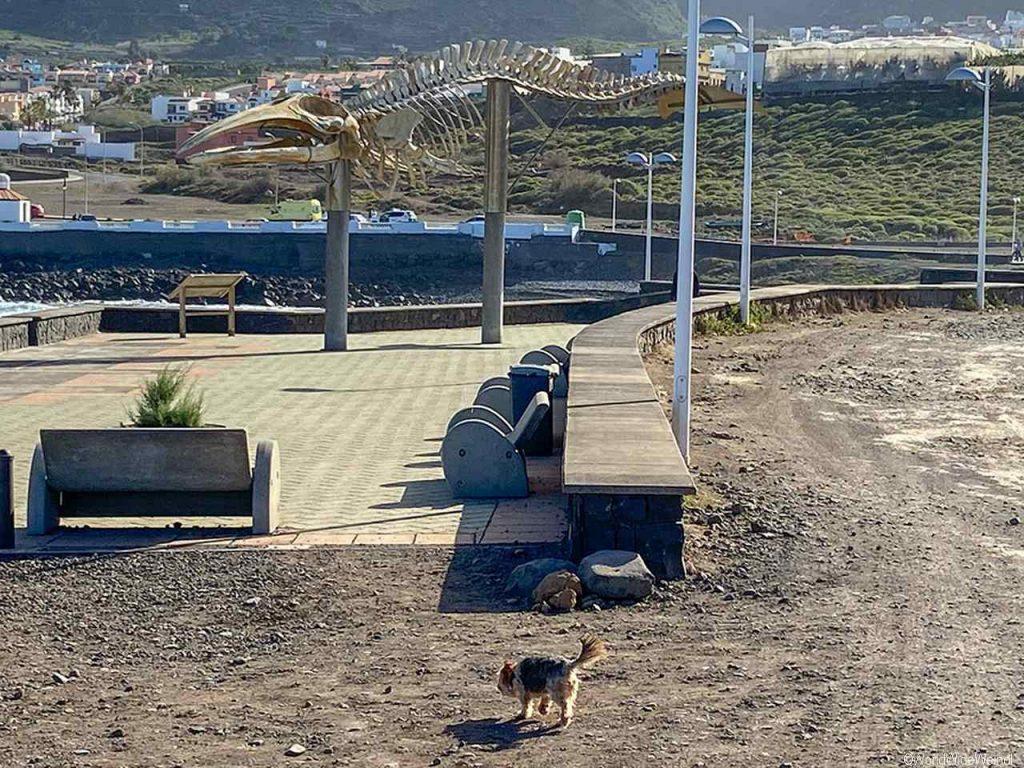 Teneriffa Süden: Walskelett beim Naturschwimmbecken Charco Los Chochos