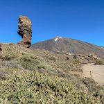 Spanien, Teneriffa_363_Nationalpark Pico del Teide