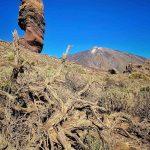 Spanien, Teneriffa_365_Nationalpark Pico del Teide