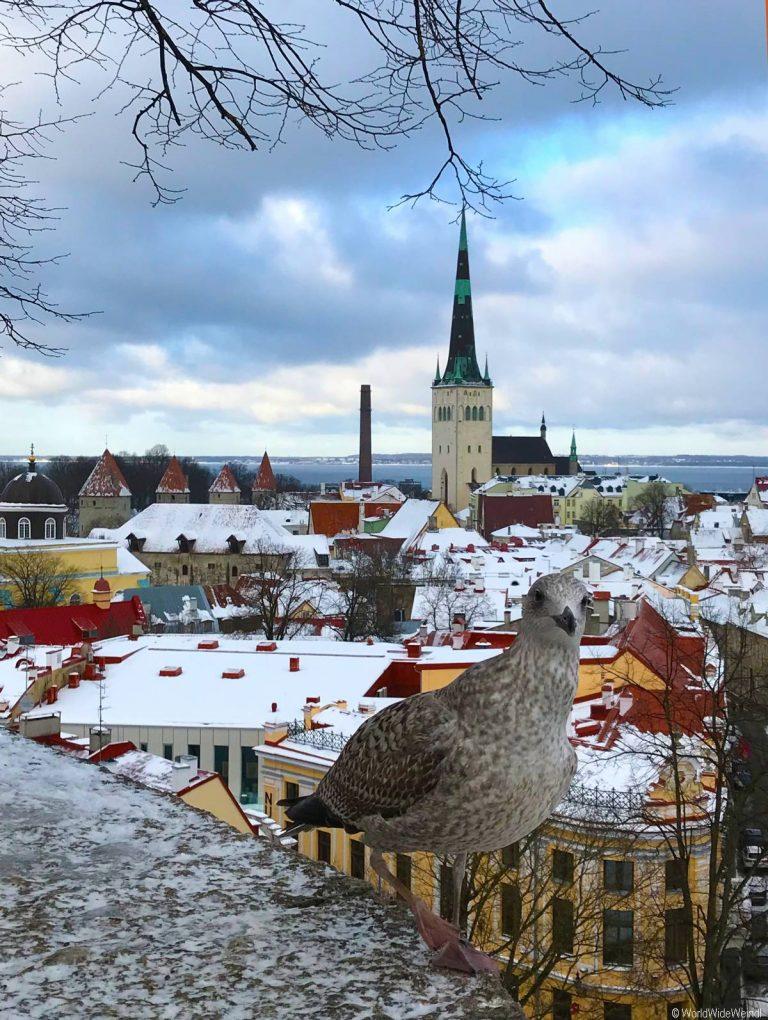 Tallinn 170- Altstadt Tallinn