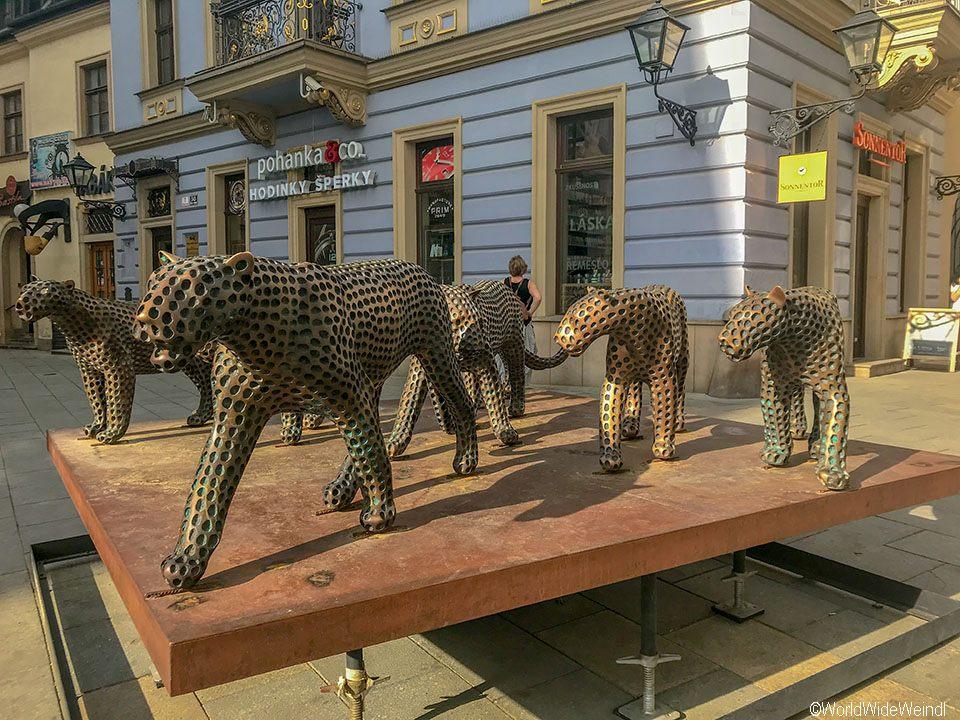 Tschechien, Brünn-70-Raubkatzen