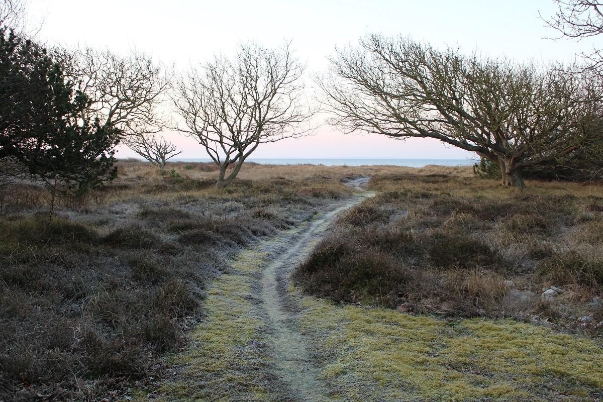 Writers walk_sti med rimfrost