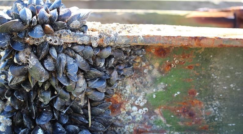 skriveøvelser på vandring - rust og muslinger