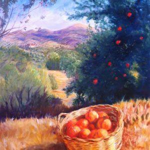 Pomegranate harvest in Algarinejo