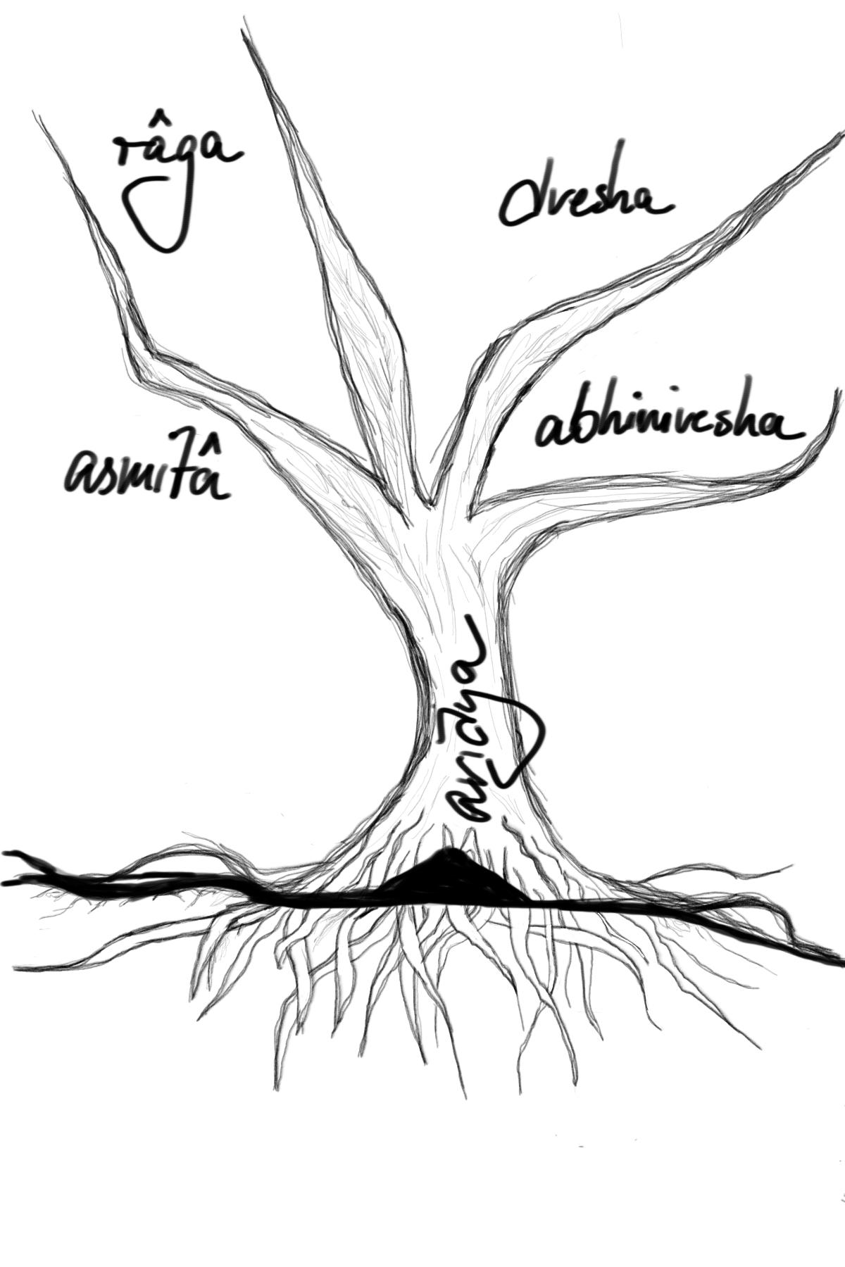 Zeichnung eines Baumes mit Wurzeln und vier Ästen - der Baum ist Avidya mit den Verästelungen raga, asmita, dvesha und abhinivesha