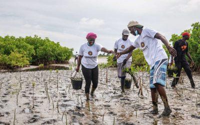 Vers le développement durable – ODD15: préserver, restaurer et favoriser la résilience des écosystèmes