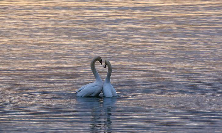 7 Feng Shui tips voor meer liefde in je leven