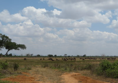 Tsavo East - View with elephants